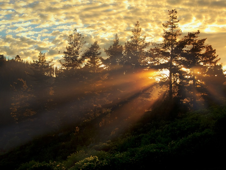 Sunrise, Knysna Forest, South Africa