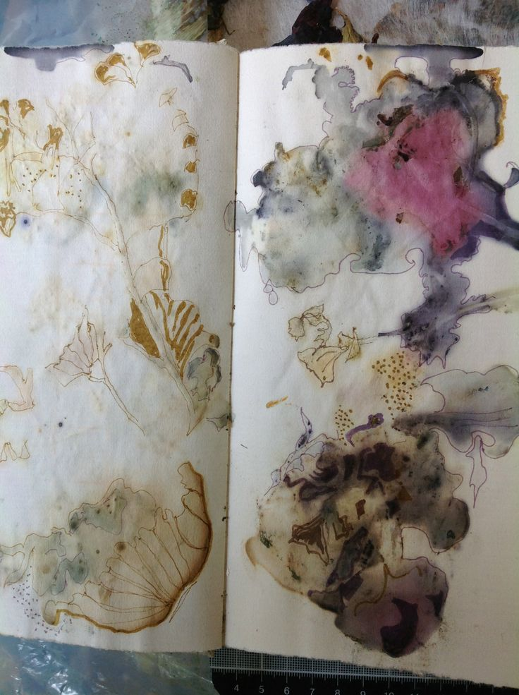 Paper pressing of plants that had been used for eco dyeing