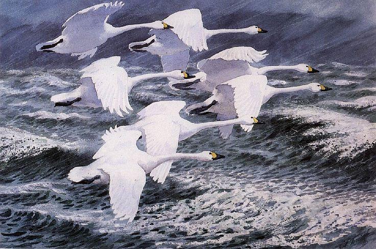 Charles Tunnicliffe - Berwick Swans