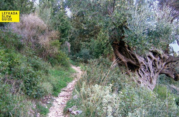 Ag. Nikitas, circular walk above the village