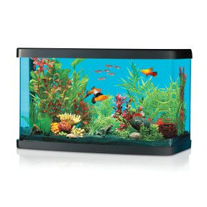 1000 images about national geographic on pinterest for Petsmart betta fish tanks