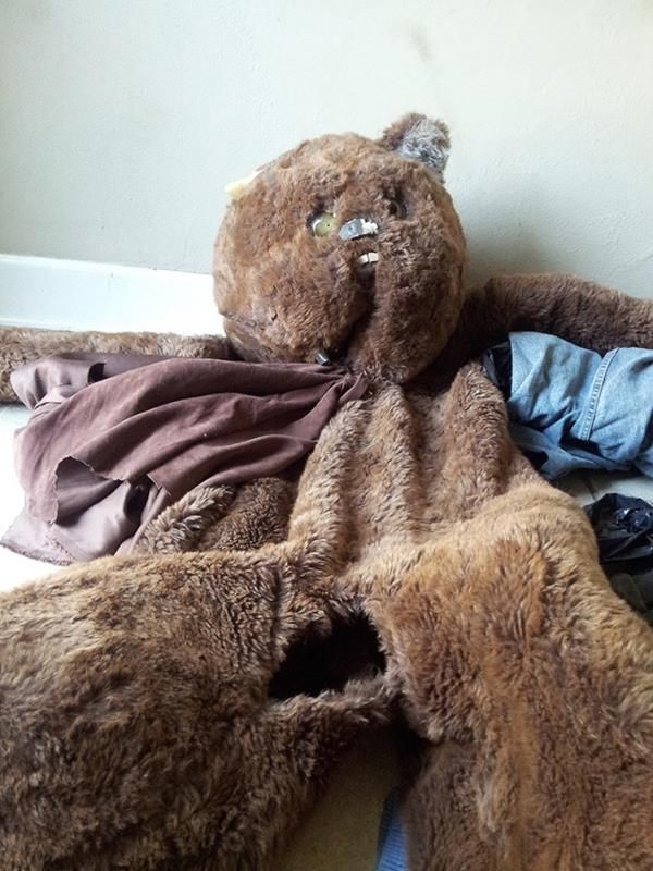 analysis-sex-teddy-bear-hole-gets