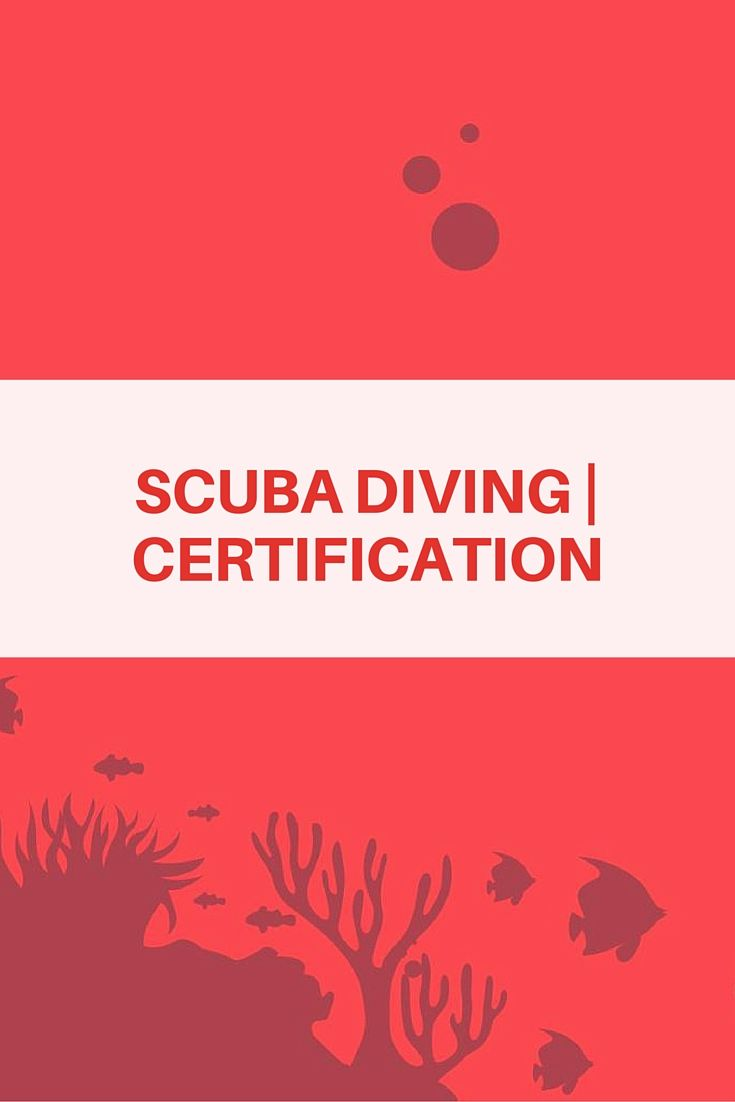 18 best learn to scuba dive images on pinterest diving diving padi dive courses in punta cana 1betcityfo Gallery