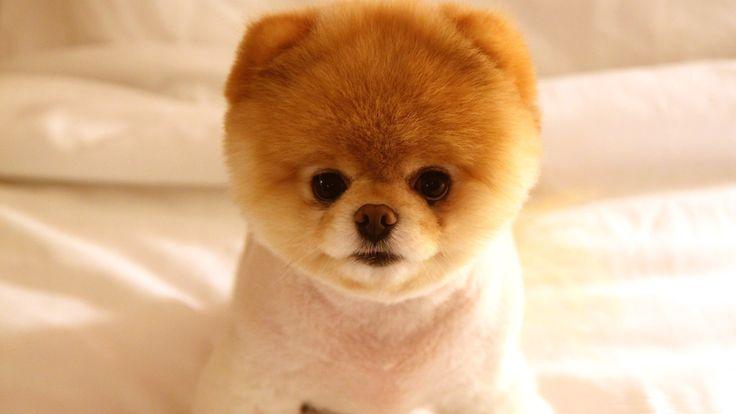 furry puppy! 8D