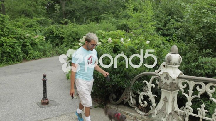 Dog walking in Cental Park, New York City, Over Antique Bridge - Stock Footage | by OsiriStar