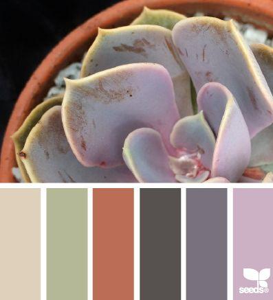 Succulent Tones - http://design-seeds.com/index.php/home/entry/succulent-tones13