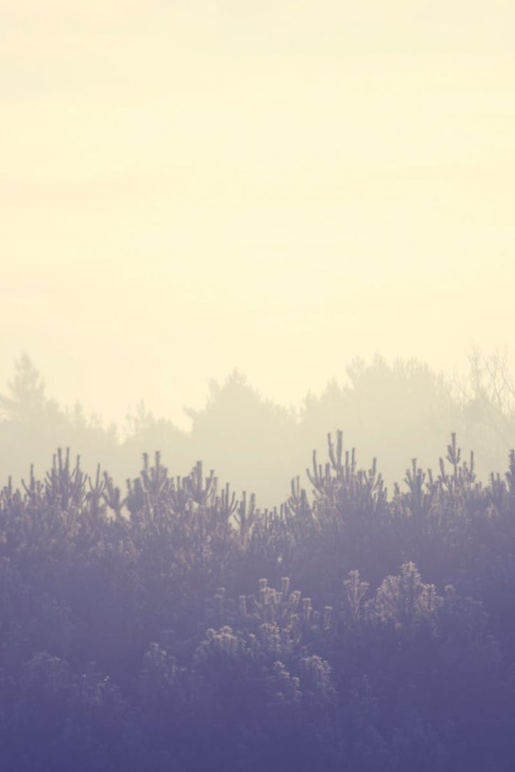 Free stock photo of landscape, nature, cloudy, forest