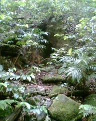 Cunningham's Gap, my first sacred place :-) xm