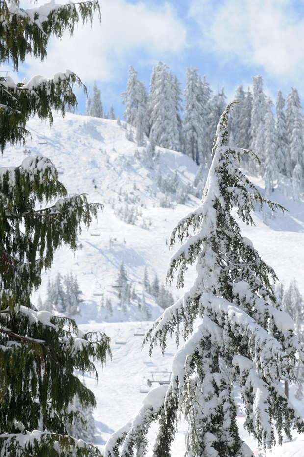 A 33-year-old snowboarder has been trapped in steep terrain west of Cypress Bowl since he veered out of bounds Sunday morning. Rescuers have been searching for the man since midnight Sunday, but the effort has been hampered by snowy weather and an elevated risk of avalanche.