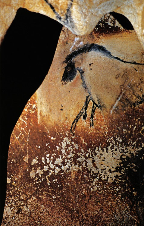 Horse in the Central recess at the Chauvet Cave in France, one of the most famous prehistoric rock art sites in the world. The paintings there have been dated between 30,000 and 33,000 years old.                                                                                                                                                                                 More