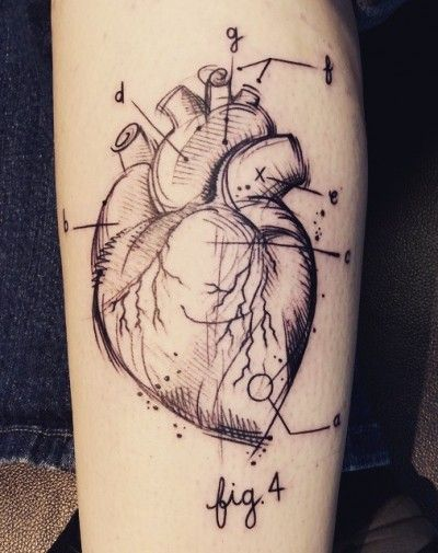 anatomical heart tattoo                                                                                                                                                      More