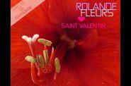 Rolande Fleurs fleuriste dans les halles de Narbonne pour la saint-valentin ou la fête des amoureux bouquets et idée cadeaux http://www.rolande-fleurs-halles-narbonne.com/album-2139972.html