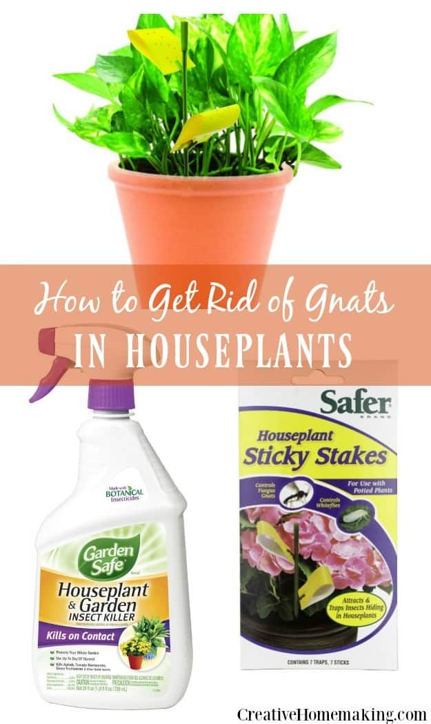 383422d0ab6e694c6683750f53f1de80 - How To Get Rid Of Gnats On Indoor House Plants