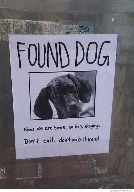 25 Funny Dog Memes