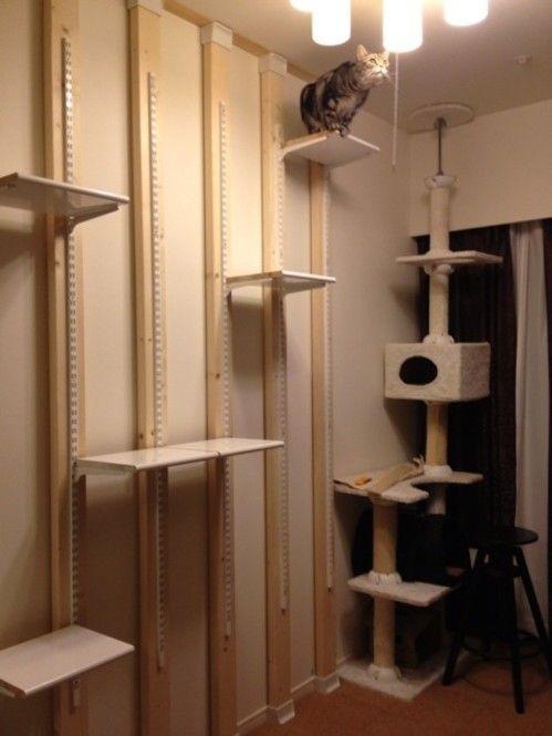最近ますます人気のリノベーション。「小物や小さな棚じゃなく、お部屋全体を改造したいけど賃貸だと制限が…」そんな方にもオススメなのが、簡単に設置できて原状回復も楽ちんな「ディアウォール」なんです。