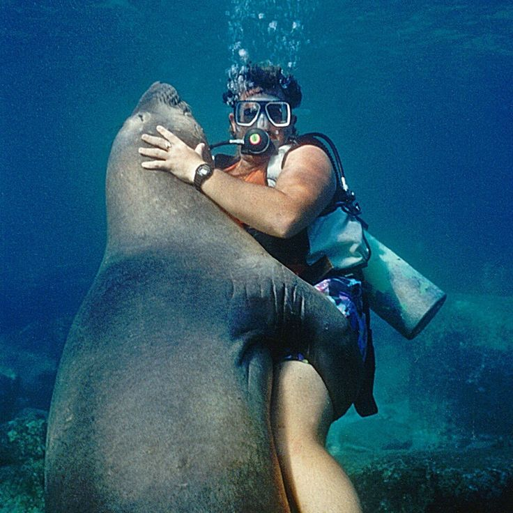 Hugs - SEAL of approval from the diver in this photograph
