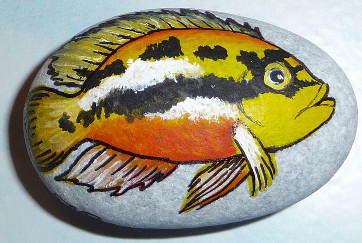 Malování na kameny - Cichlida (cichlida.jpg)