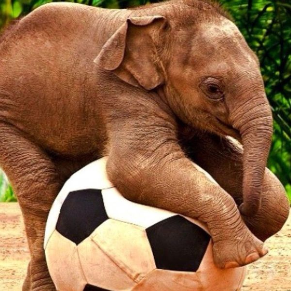 Soccer!!!: Plays Soccer, Babies, Animals, Baby Elephants, Soccer Ball, Elephants Plays, Baby Animal, Adorable, Things