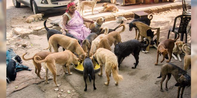 #PratimaDevi | The #Mother Of #StrayDogs