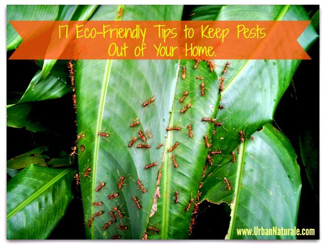 17 Eco Friendly Tips To Keep Pests Out Of Your Home And Garden U2013 Infographic