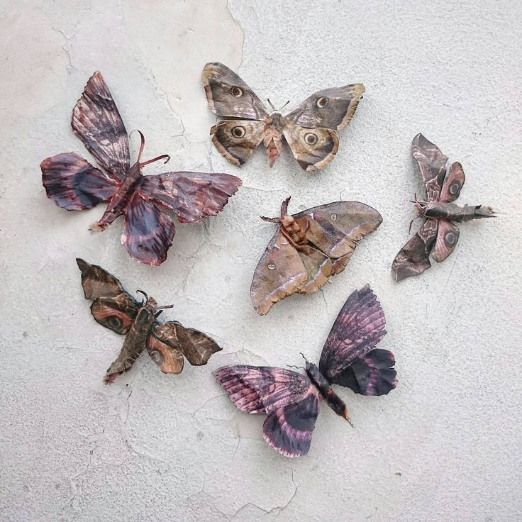 Paper moths by Ulla Thynell.