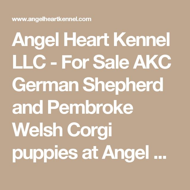 Angel Heart Kennel LLC - For Sale AKC German Shepherd and Pembroke Welsh Corgi puppies