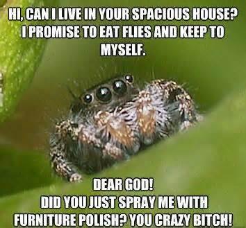 Love these Misunderstood Spider memes.