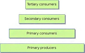 """What Is the Definition of an Energy Pyramid? #definition #for #energy http://energy.remmont.com/what-is-the-definition-of-an-energy-pyramid-definition-for-energy-2/  #definition for energy # What Is the Definition of an Energy Pyramid? """"What is the definition of an energy pyramid?"""" A graphical energy pyramid is a rendering that categorizes the […]"""