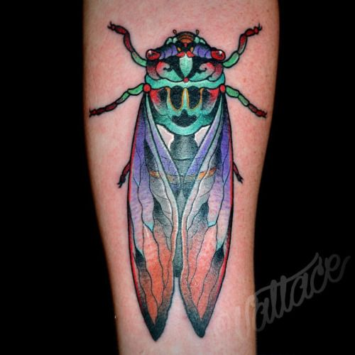 best 25 cicada tattoo ideas on pinterest. Black Bedroom Furniture Sets. Home Design Ideas
