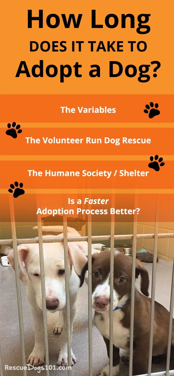 How Long Does It Take To Adopt A Dog? | Dog adoption, Dogs ...