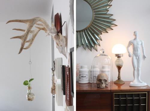 Antlers, Treasures under glass