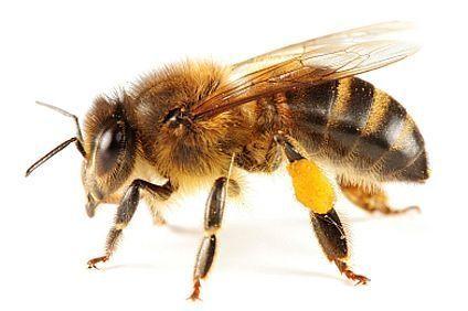 Bee-friendly ways to keep bees away!
