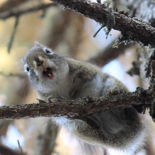 """""""Hey! Anybody got any nuts?""""   Wildlife in New Brunswick, Canada   Photo: @katie__a / Instagram #ExploreNB"""