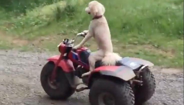 Auf und davon: Dieser Hund pfeift aufs Laufen