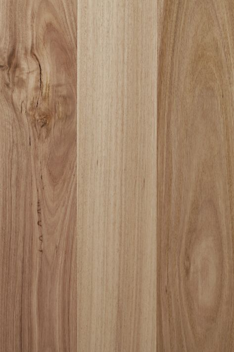 Spotted Gum - Melbourne Floor Direct