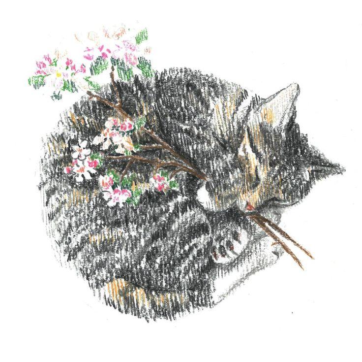 motley cat, sleep, apple blossoms, сolour pencils, graphic, illustration, draw, кошка, кошка спит клубочком, яблоня, графика, иллюстрация, цветные карандаши.