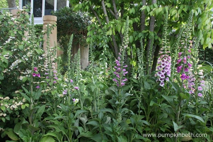 I love foxgloves!  These Digitalis purpurea looked stunning in The Time In Between Garden by Husqvarna and Gardena at the 2015 RHS Chelsea Flower Show.