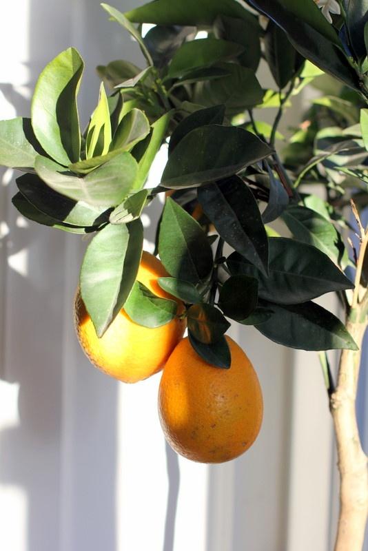 Indoor Potted Lemon Tree