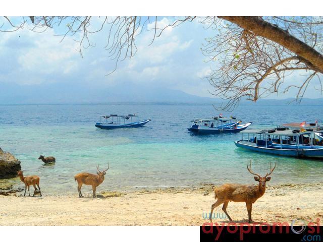 Pulau Menjangan #ayopromosi www.ayopromosi.com