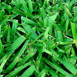 Best Fertilizer for St. Augustine Grass | Lawncare.net