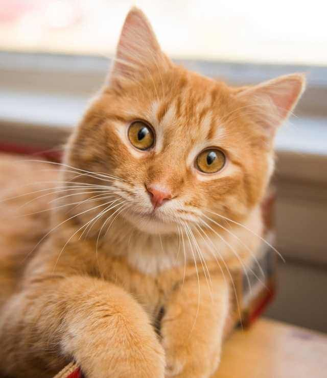 What A Pretty Face Cute Cats Orange Tabby Cats Pretty Cats