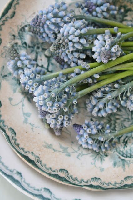 grape hyacinths and blue and white china - lovely