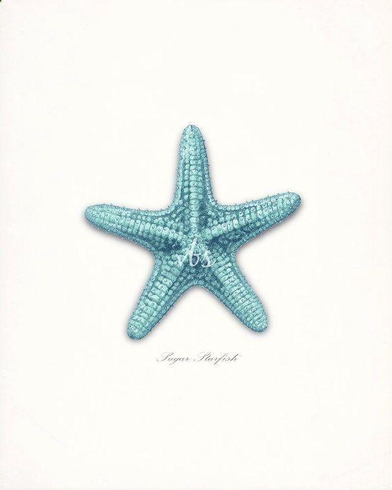 Coastal Decor Sea Shell Art - Sugar Sea Star Natural History Wall Decor Print 8x10 bright turquoise  - Decor Ideas