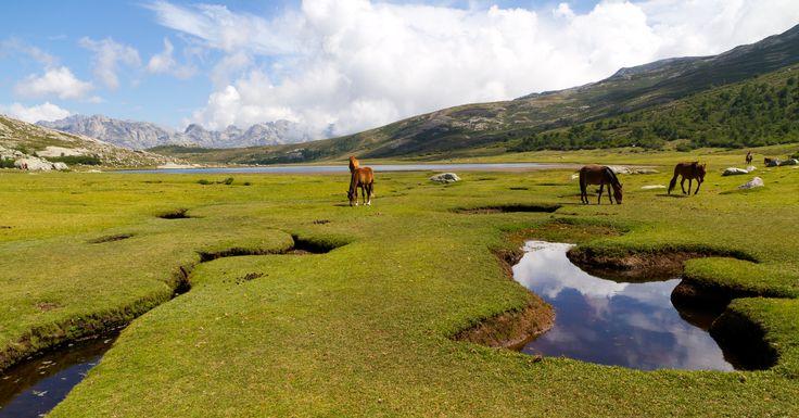 Le lac de Nino - Au centre de la Corse, entre Corte et Porto, il est situé sur le parcours du GR20. A la différence des autres lacs d'altitude (Melo et Capitello), Nino a la particularité d'occuper un site très ouvert. C'est un lac glaciaire qui a la réputation d'être le «plus beau de Corse».