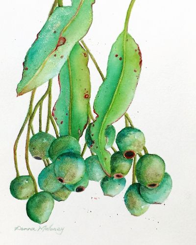 """Gum Nut Study"" Watercolor, 29.5cm x 35cm by artist Donna Maloney. See her portfolio by visiting www.ArtsyShark.com"
