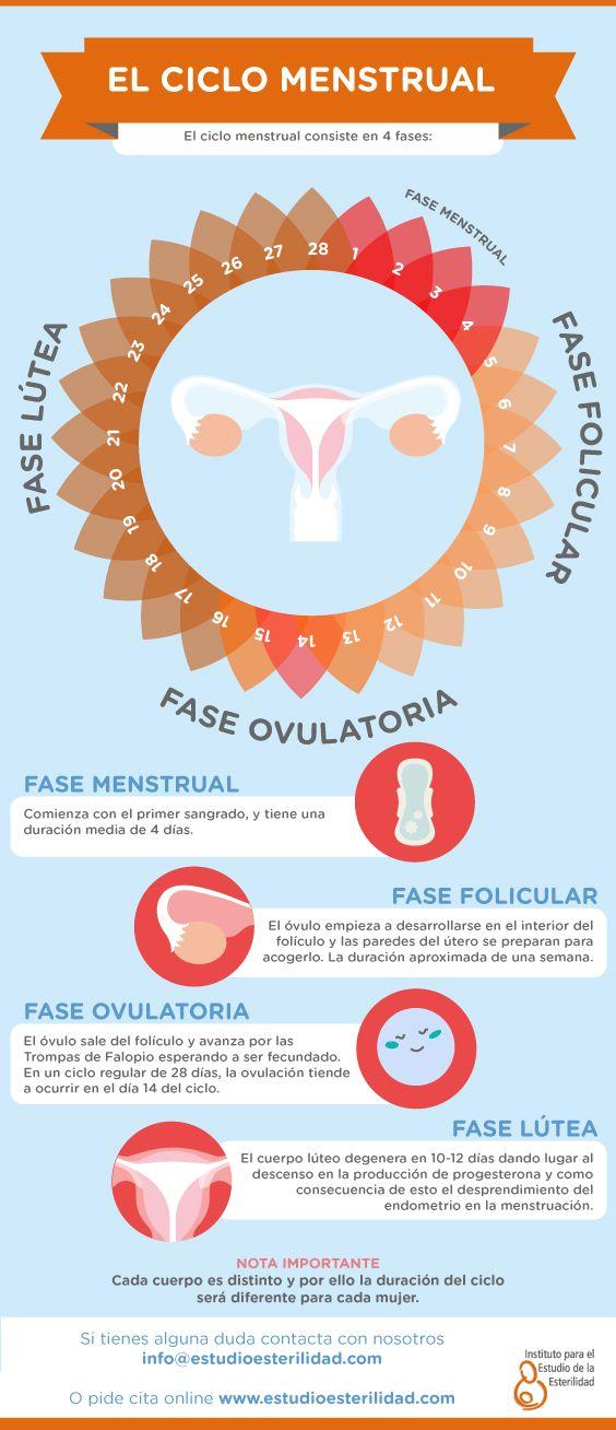 Las fases del ciclo menstrual. #MenstrualCycle #CicloMenstrual #Ovulación #FaseFolicular #FaseLútea