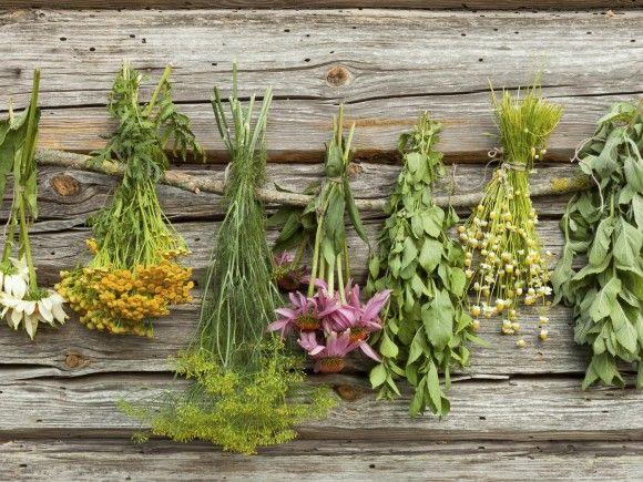 Resultado de imagen para plantas medicinales