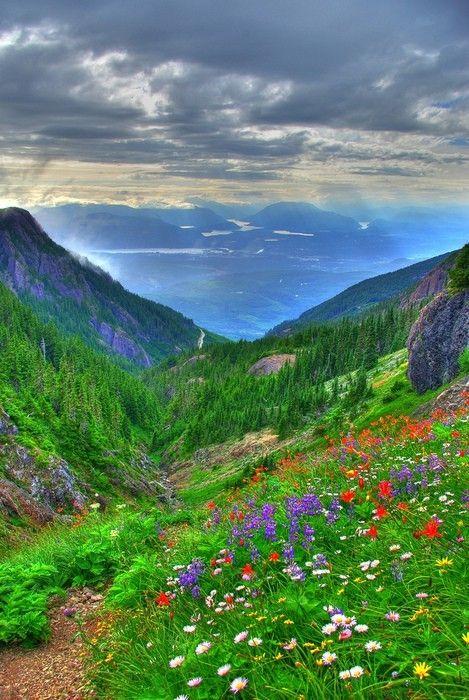 Nanimo, British Columbia: Flowers Gardens, British Columbia Canada, Flowers Fields, Buckets Lists, Vancouver Islands, Beautiful Places, Valley, Britishcolumbia, Wild Flowers