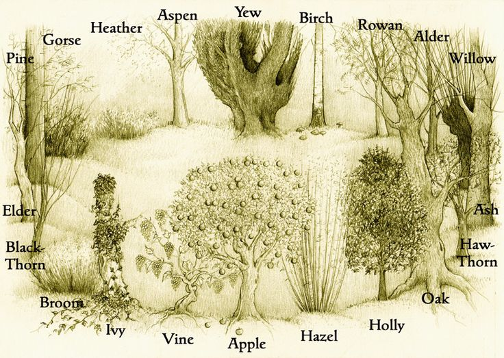 The Ogham Grove is formed of the twenty traditional ogham trees placed in their correct sequence.  Yew is in the north for Winter Solstice; Ash is in the east for Spring Equinox; Apple in the south for Summer Solstice; and Elder in the west for the Autumn Equinox.