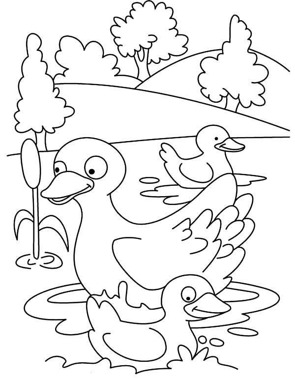Duckling Duckling Is Happy Swim With Her Mom Coloring Page Buku Mewarnai Lembar Mewarnai Stensil